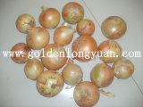 Cebolla fresca de China, la cebolla roja, amarilla la cebolla