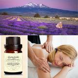 De privé Olie van de Lavendel van de Aard van het Etiket Organische