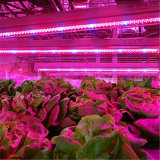 O diodo emissor de luz cheio da planta do espetro T8 T5 cresce a câmara de ar leve