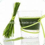 Fabrik-Preis-organisches sofortiges Puder-Gersten-Faser-Gras-Puder