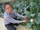 Bio- fertilizzante di Unigrow sull'ortaggio fresco