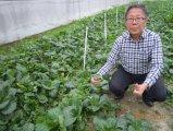 葉野菜のUnigrowの生物肥料