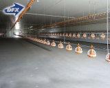 Цыплятина конструкции сельскохозяйственного строительства цыпленка расквартировывает к Филиппиныы