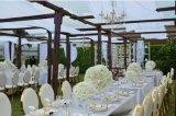 식당 가구 (YC-SS36)를 위한 아랍 에미리트 연방 그리고 두바이 금 스테인리스 의자