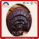 100% Ganoderma 말린 Lucidum Reishi 버섯 사나운 Ganoderma Lucidum