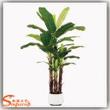 熱い販売のホーム装飾の人工的なプラントバナナの鉢植えなBonsaiの木