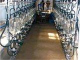 Tipo dell'osso di pesci della macchina del latte (005)