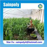 Serre chaude solaire d'intérieur de culture de légumes pour le poivre