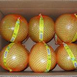 Frais de la nouvelle récolte de haute qualité du miel pomelo
