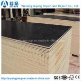 Изготовленный на заказ пленка размера смотрела на переклейку для Shuttering бетона