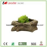 소형 다즙 재배자, 나무로 되는 시멘트 남비를 가진 선인장 남비