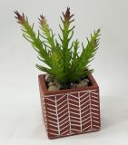 Fiori succulenti della decorazione artificiale conservati in vaso