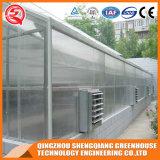 Serre chaude commerciale de feuille de polycarbonate de structure métallique d'agriculture