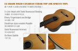 Buena guitarra clásica del diseño 7-String Smallman