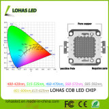 COB LED 10W-300W Full Spectrum COB LED chip de LED de Cultivo