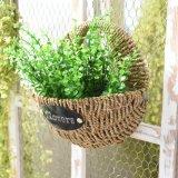 Caliente-Vender Handcraft la cesta natural de la paja (BC-S1211)