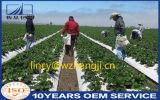 Tela não tecida UV de Spunbond da proteção de planta da resistência para a agricultura