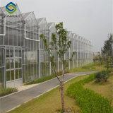 Preiswertes Glasgewächshaus mit Wasserkultursystem
