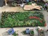 Высокое качество Искусственные растения и цветы Зеленая Стена Gu-Wall23767848423