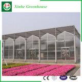 Casa verde de vidro da alta qualidade da fábrica de China para o tomate