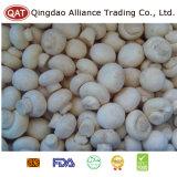 La nouvelle récolte Champignon champignon pour l'exportation