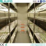 Камера с изменением климата с помощью системы светодиодного освещения с высокой интенсивностью поставок для роста для установки внутри помещений