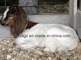 馬のShavingsのための卸し売り小さい木製の剃る機械