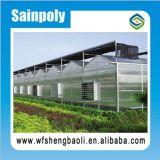 PC de serre de 8 mm feuilles/ Feuille de polycarbonate