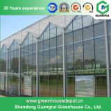 Serra di vetro per la piantatura del cetriolo e del pomodoro