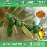 Прованское (Olea Europaea) Leaf Extract (10%~40% Oleuropein/hydroxytyrosol)