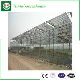 Estufa de vidro multi Span para produtos hortícolas/Flores