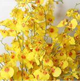 Kunstseide-Blaue/Purpurrote/weiße/Gelb-/Grün-/weißeblumen-Tanzen-Orchidee-Blume