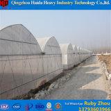 China-Hersteller-Plastikfilm-Tunnel-Gewächshaus für Tomate von Invernadero