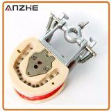 Zahnmedizinische Zähne und Kiefer-Modell mit den Zähnen Teeth/32 der Schrauben-28
