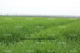 卸し売り自然なオオムギ草の粉