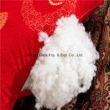Sperme magnétique Cassia rempli l'oreiller en coton blanc pour l'hôtel