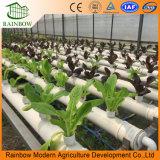Sistema hidropónico del invernadero eficiente del policarbonato para el tomate y la lechuga