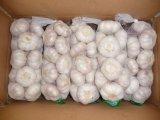 Buona qualità dell'aglio dell'aglio fresco della Cina