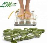 Slimming Capsules Aloe Vera extrait organique