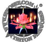 عيد ميلاد لون موسيقى لوطس شمعة لعبة ناريّة لعبة لعبة ناريّة [بيرثدي برتي] إمداد تموين