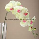 Il Phalaenopsis di seta di alta qualità delle 8 teste fiorisce i fiori artificiali di tocco reale