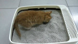 Litera de gato del olor del limón Deodrant