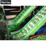 Переработка пищевых сортов Hairise складной малых ременный конвейер