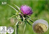 100% Leite Natural Thistle Extract Silymarin 70% por UV