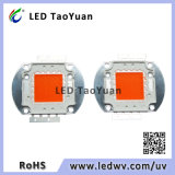 Grow Lighting LED Chip 30-100W Espectro completo 380-840nm