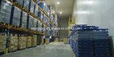 Armazém do grande tamanho e fábrica de processamento frios de mantimento frescos personalizados para vegetais e frutas