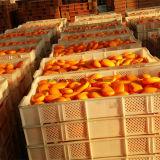 الصين مصنع إمداد تموين جلد يبيّض حمام جمال صابون