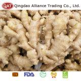 Bon Prix standard élevé de graisses chinois de gingembre frais