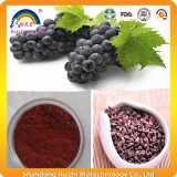 Trauben-Frucht-Startwert- für Zufallsgeneratorauszug-Puder für Biokost
