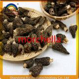 El Morchella orgánico secado precio apropiado natural integrado de los productos primarios prolifera rápidamente buena calidad
